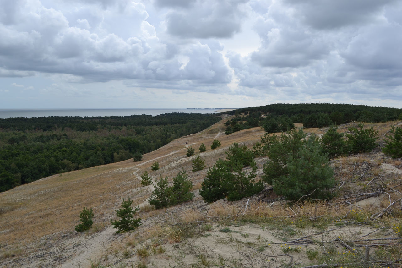 Arid Climate Beauty In Nature Curonian Bay Curonian Spit Curonianspit Exploring Hill Horizon Over Land Idyllic Landscape Natural Park Outdoors Physical Geography Remote Scenics Sky And Nature Tranquil Scene Tranquility