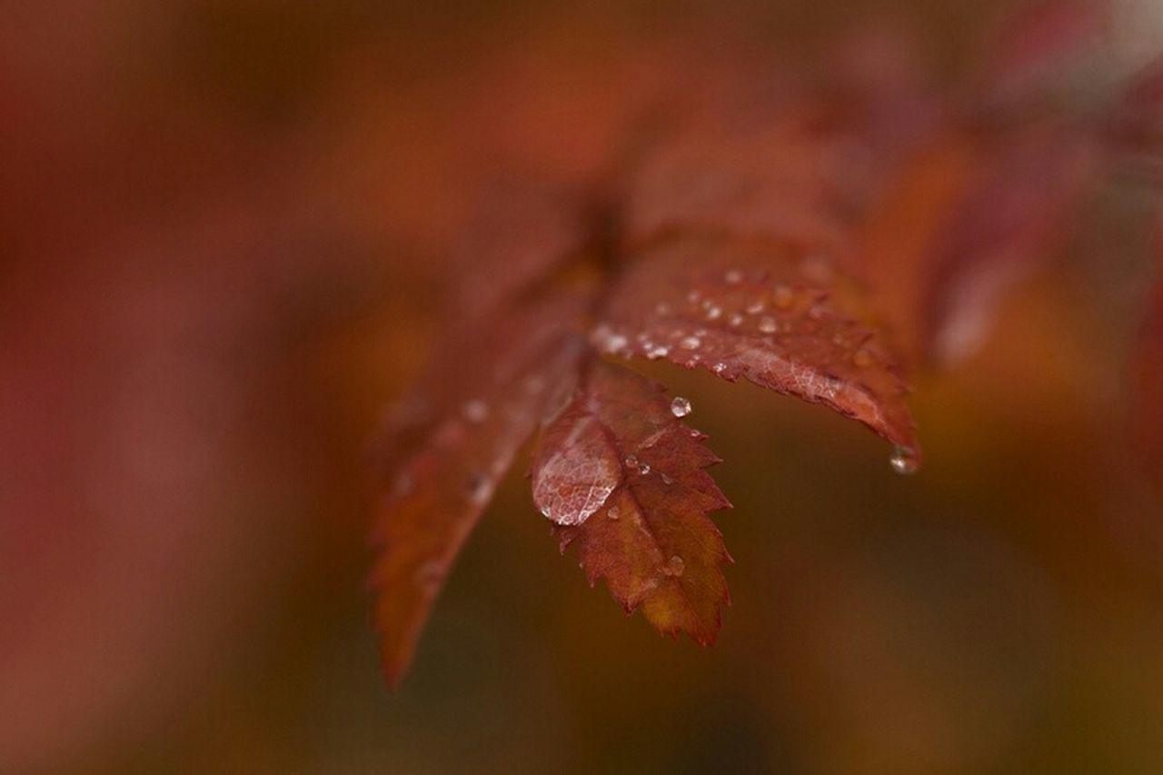 Daybugphotos.com Macro Lensbaby Photographie  Velvet56 Seeinanewway