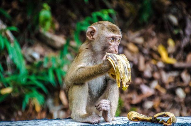 Animal Photography Animals In The Wild Tiere Affen monkeys Animal Wildlife First Eyeem Photo
