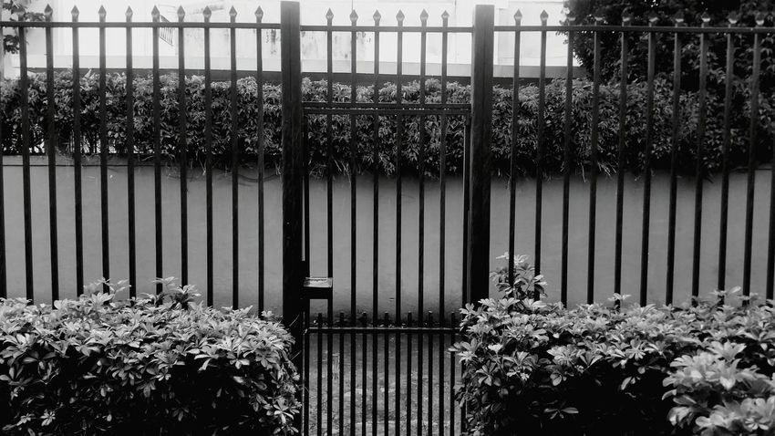 Monochrome Photography Plant Tree Fence Growth Built Structure Architecture BrownPersonal Perspective Costa Rica Anastasia Form Day Green Color Outdoors Growing Corrugated Iron Green Hedge Gate Blackandwhite Black And White Black & White Yard Frontdoor