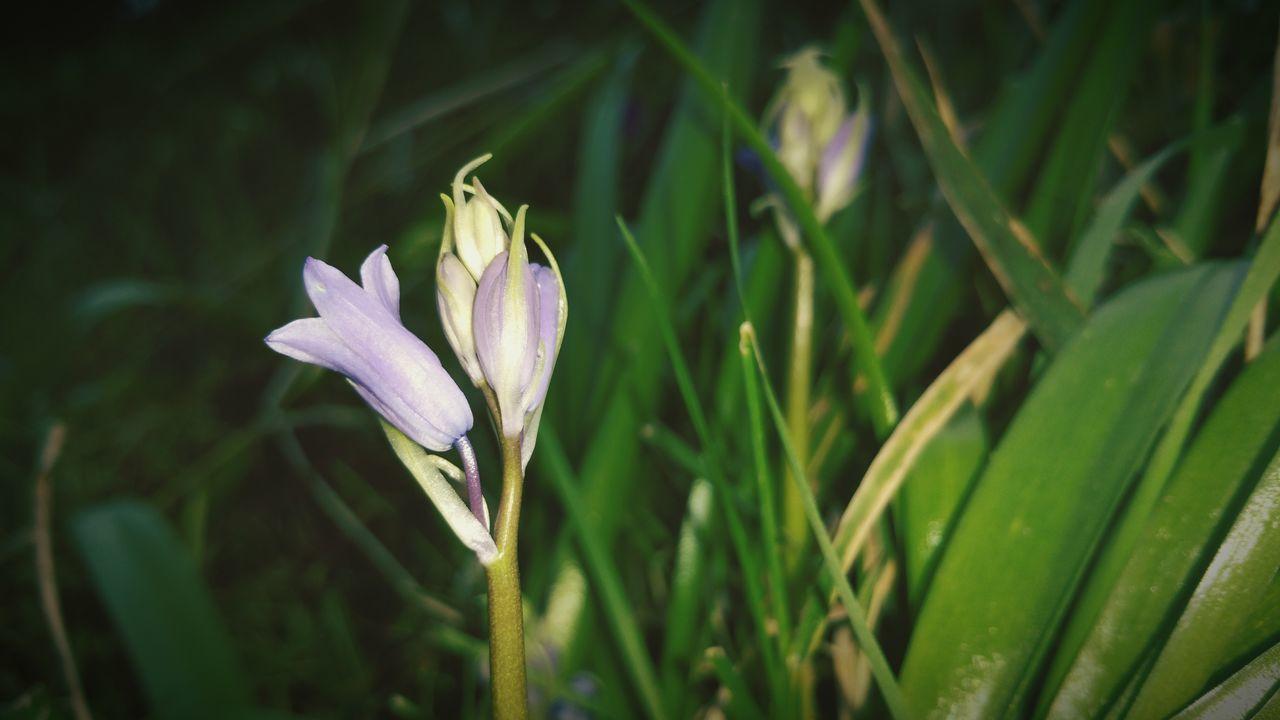 Wild Flowers My Front Garden