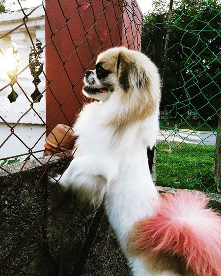 Dog One Animal Domestic Animals Animal Themes Day Outdoors Pets Mammal No People Close-up