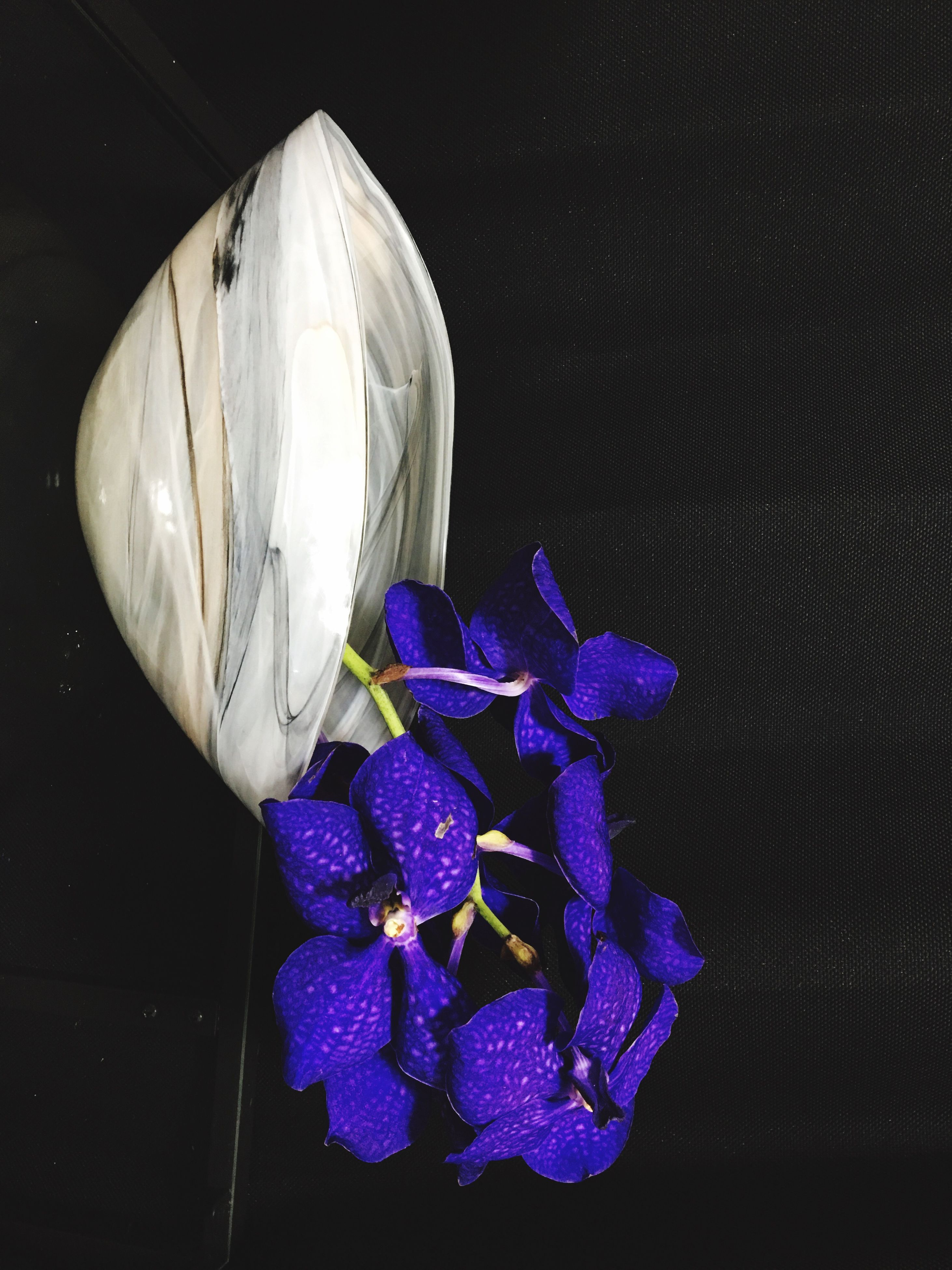 blue, flower, no people, purple, fragility, indoors, close-up, beauty in nature, nature