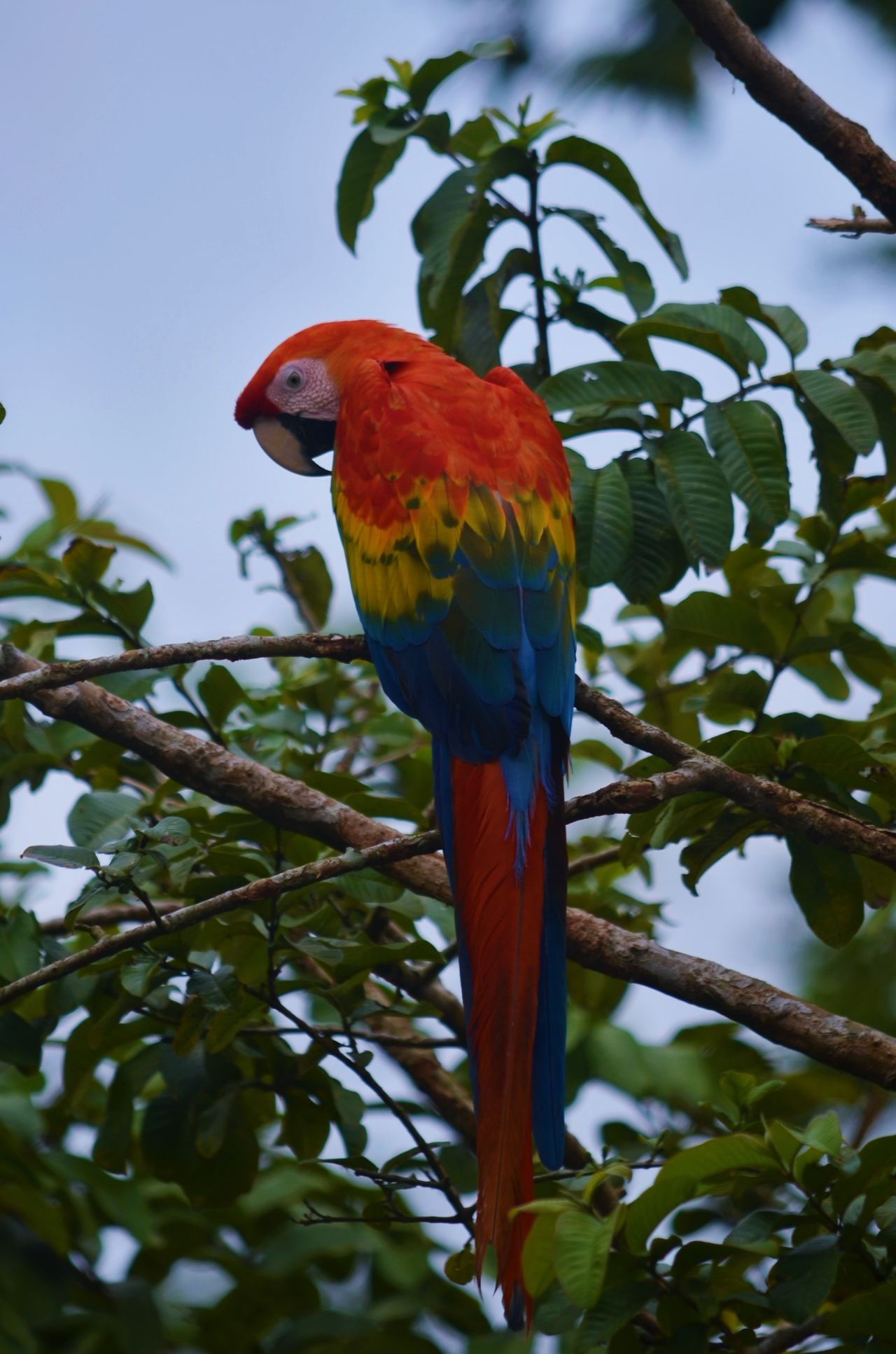 Beautiful stock photos of jungle, Animal Themes, Animals In The Wild, Beak, Bird