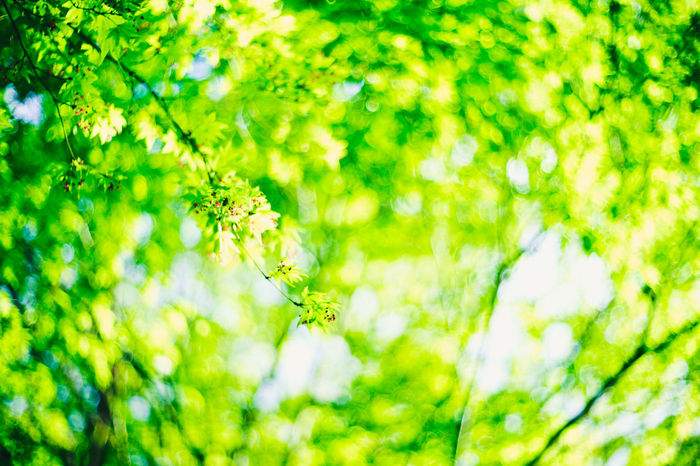 Chill In The Air Fragility Freshness Green Freshness Green Green Green!  Green Reflection Growth In Bloom Nature Nature Photography Outdoors Plant Springtime Summery Woods And Color