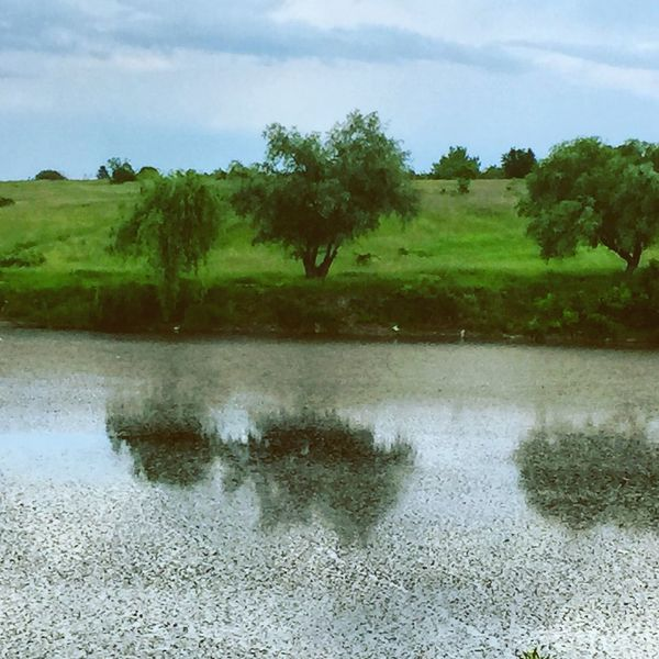 Beauty In Nature Calm Cloud Cloud - Sky Day Grass Green Green Color Growth Idyllic Lake Landscape Nature No People Non-urban Scene Outdoors Plant Reflection Remote Scenics Sky Tranquil Scene Tranquility Tree Water