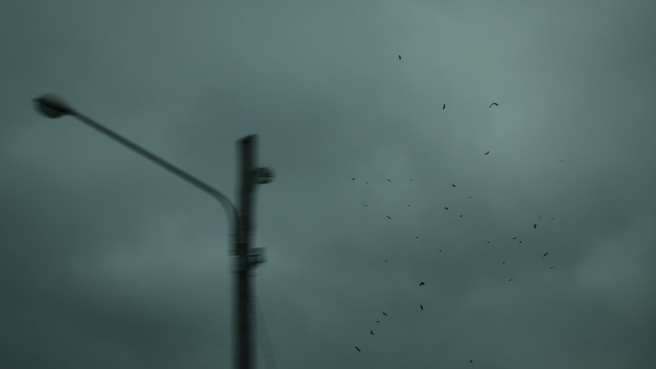 Birds Road bird blurred motion flying Large Group Of Animals outdoors sky streetphotography