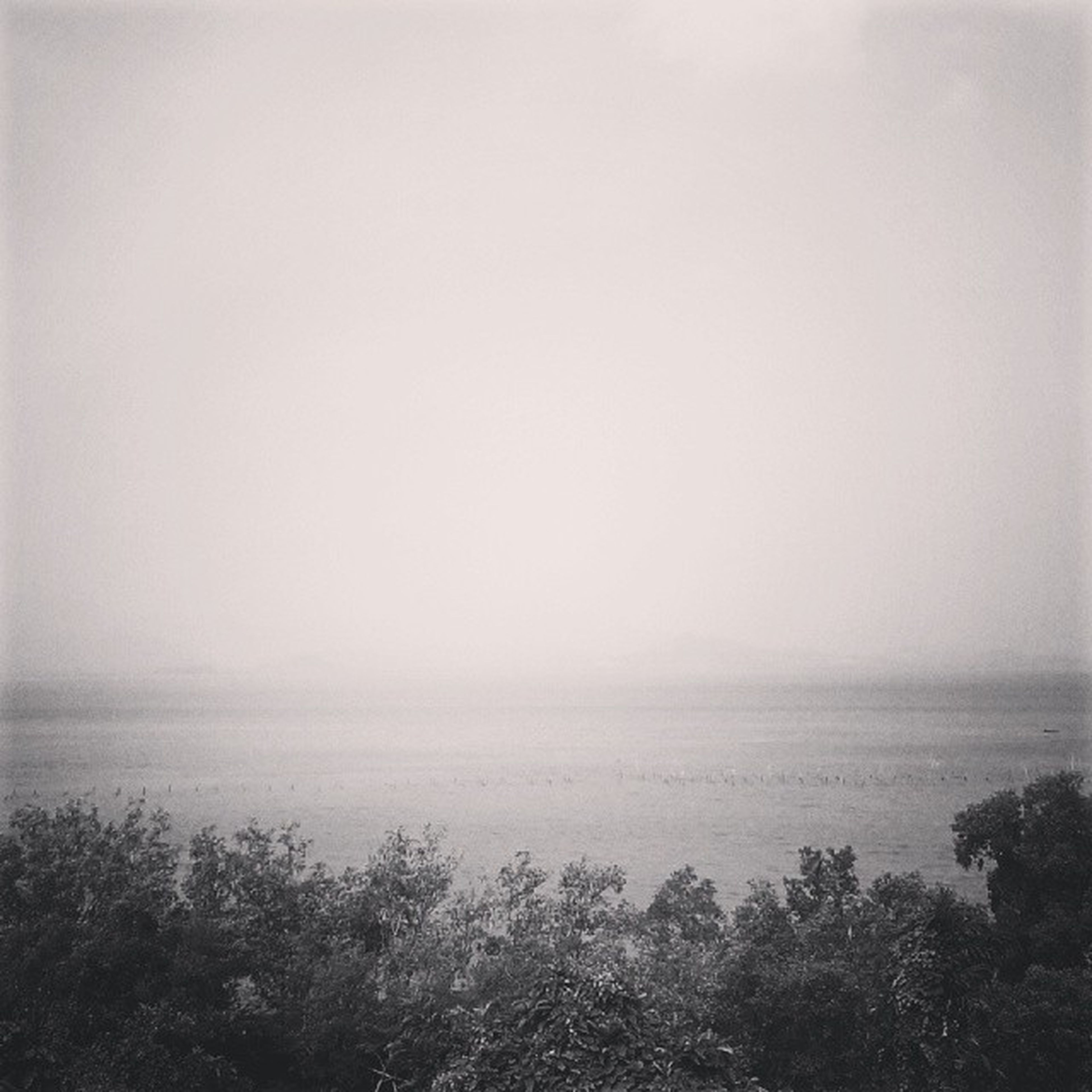 tranquil scene, tranquility, copy space, scenics, fog, beauty in nature, horizon over water, water, sea, nature, foggy, tree, idyllic, weather, sky, non-urban scene, remote, outdoors, no people
