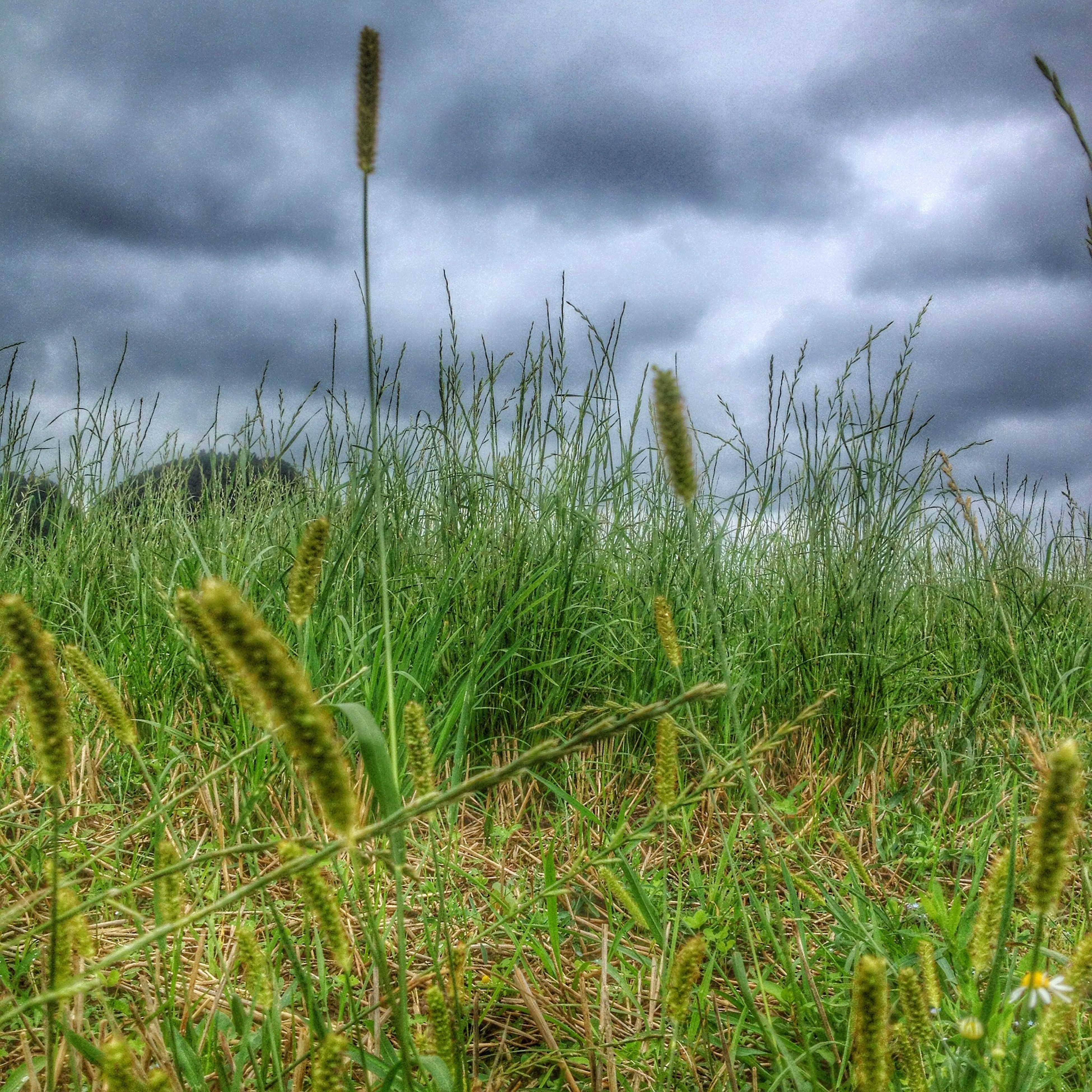 growth, sky, grass, field, plant, cloud - sky, nature, cloudy, green color, tranquility, beauty in nature, tranquil scene, cloud, agriculture, crop, growing, rural scene, scenics, landscape, day