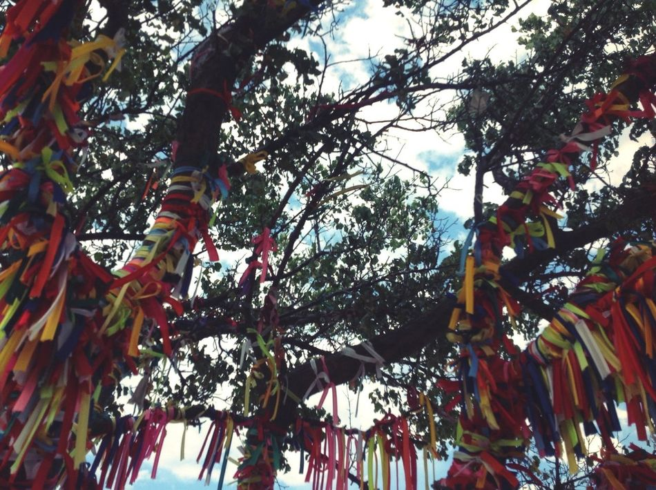 Trees Tree Tape Leaves Leaves🌿 Green Green Color Wish Tree Wish Wishtree Sky Sky And Clouds