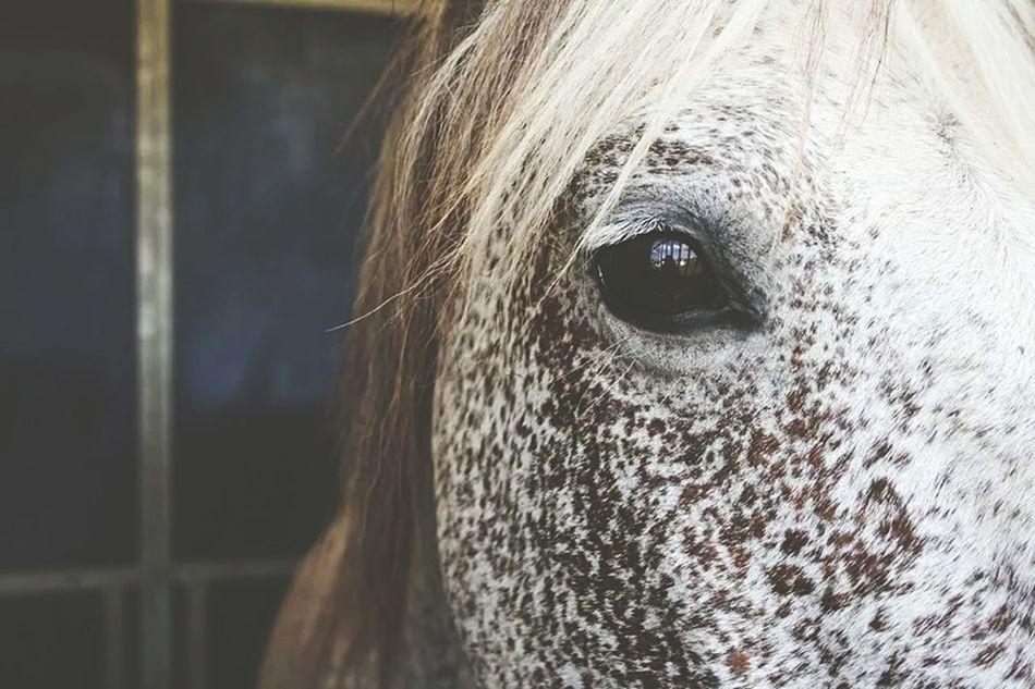 Photo Picture Horse Beautifulhorse Ilikethis Animal Animal Photography EyeEm Animal Lover
