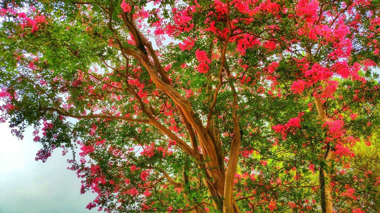 tree, growth, nature, branch, beauty in nature, no people, tranquility, outdoors, red, flower, low angle view, leaf, day, autumn, scenics, freshness