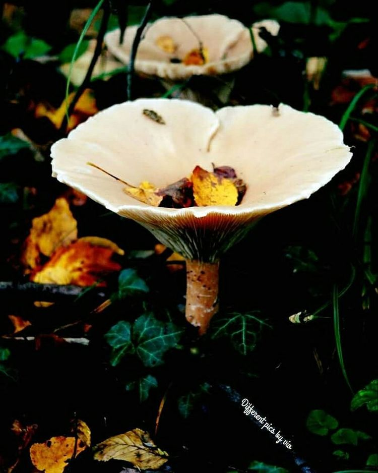 Differentpicsbyvio Autumn Colors Autumn Leaves Autumn Check This Out Fall Enjoying Life Pilz Mushrooms
