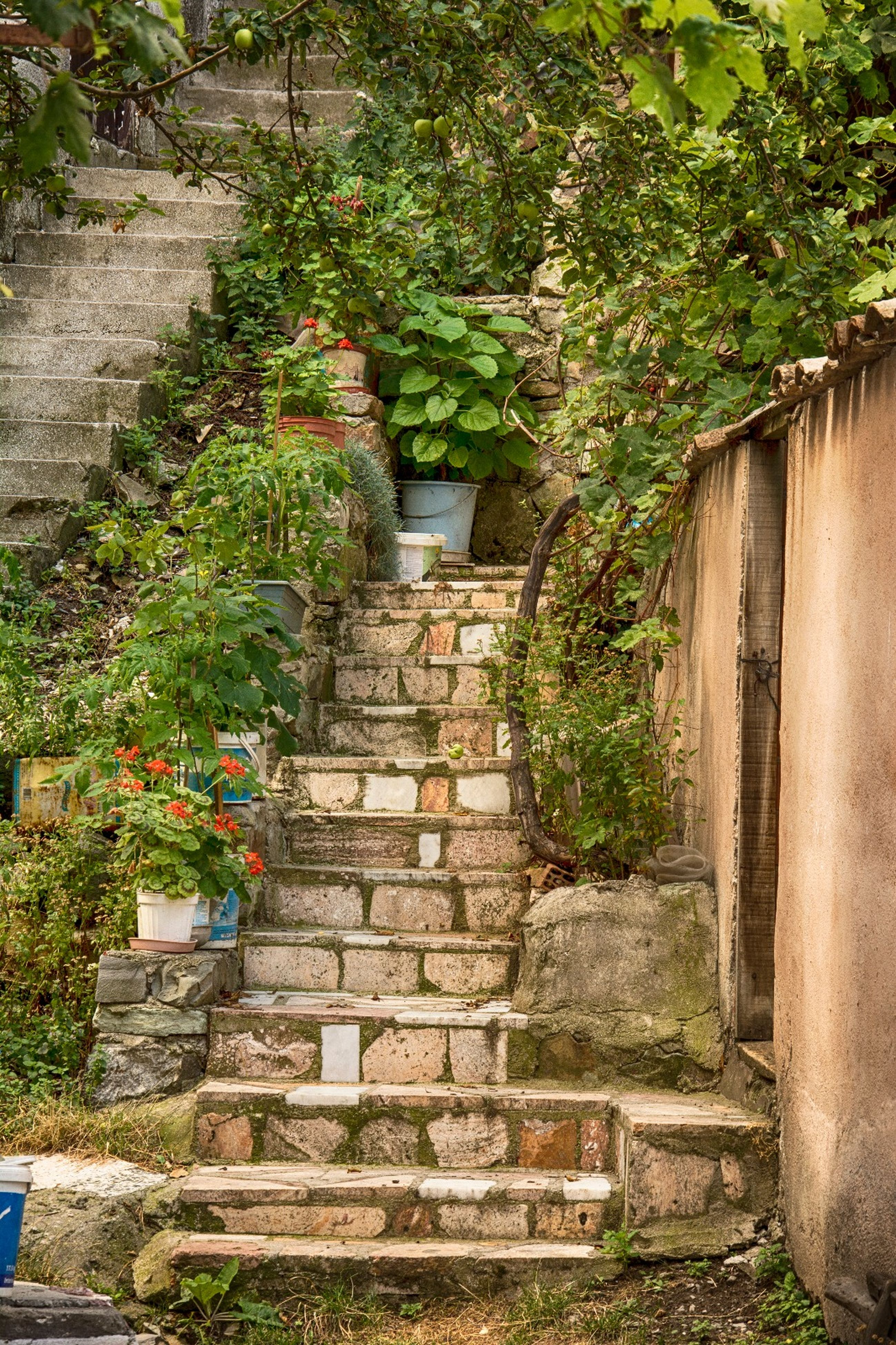 steps, plant, architecture, built structure, history, no people, steps and staircases, outdoors, day, growth, nature, building exterior, beauty in nature