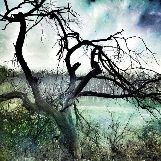 Tree Mexturesapp Landscape_Collection Nature Rural Scenes Bleak Mood Tree_collection  Rural Landscape Tree And Sky