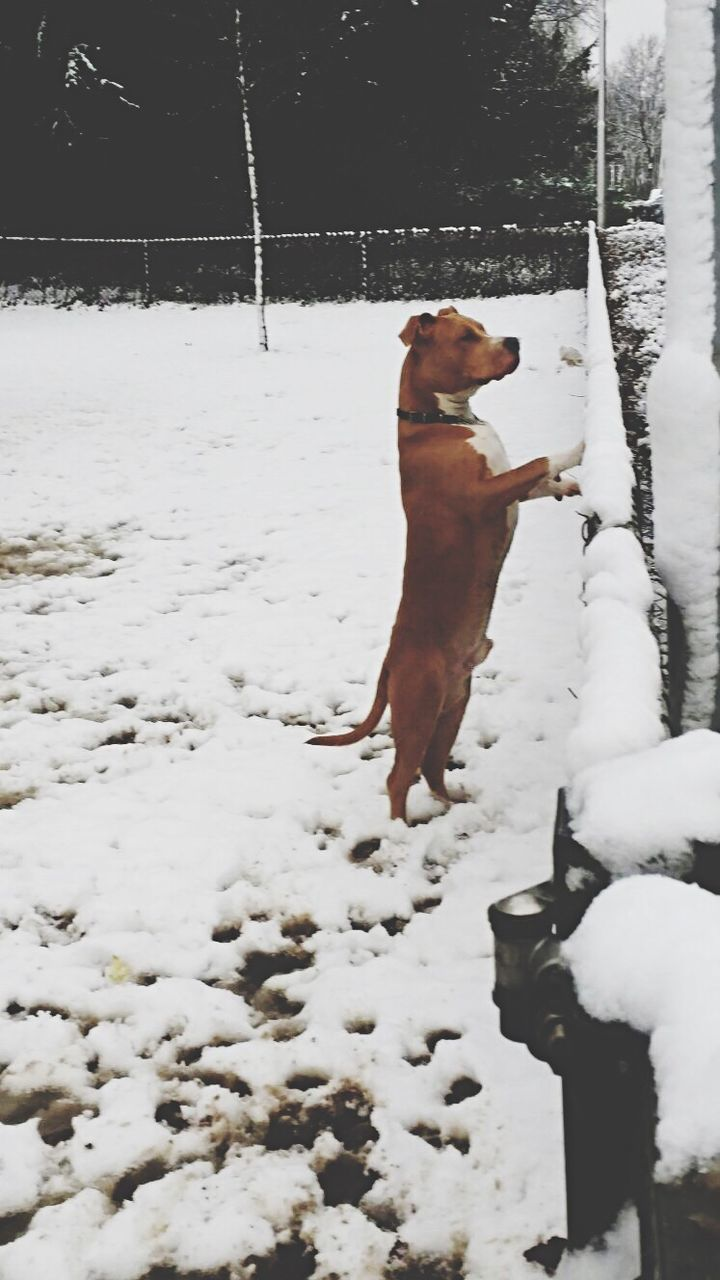 dog, domestic animals, pets, mammal, snow, cold temperature, animal themes, winter, day, nature, one animal, field, outdoors, no people, full length, tree