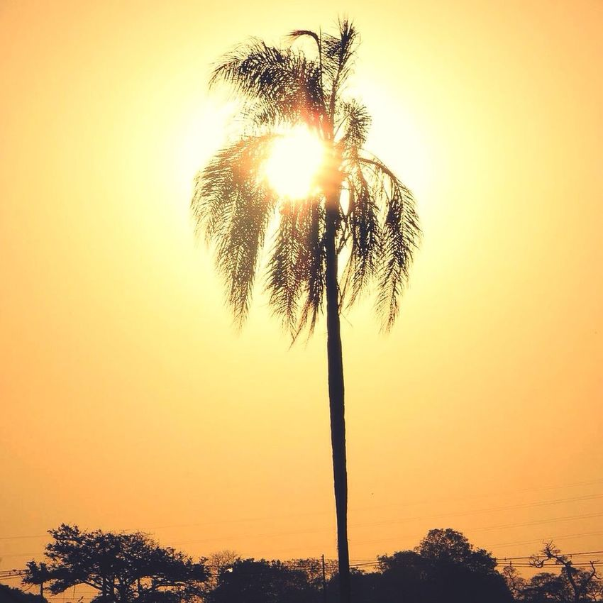 Paint The Town Yellow Coconut Tree Sun Sunset Sunsetphoto Skylover