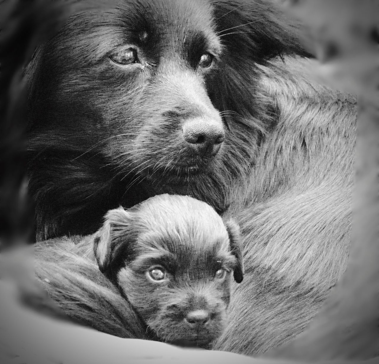 Dog Mammal Animal Themes Cute Pets Domestic Animals Maternity Black Blackandwhite Animal Family Puppy Looking At Camera Animal Eye Only One No People Portrait Indoors  Day Total Black EyeEmNewHere Welcome To Black