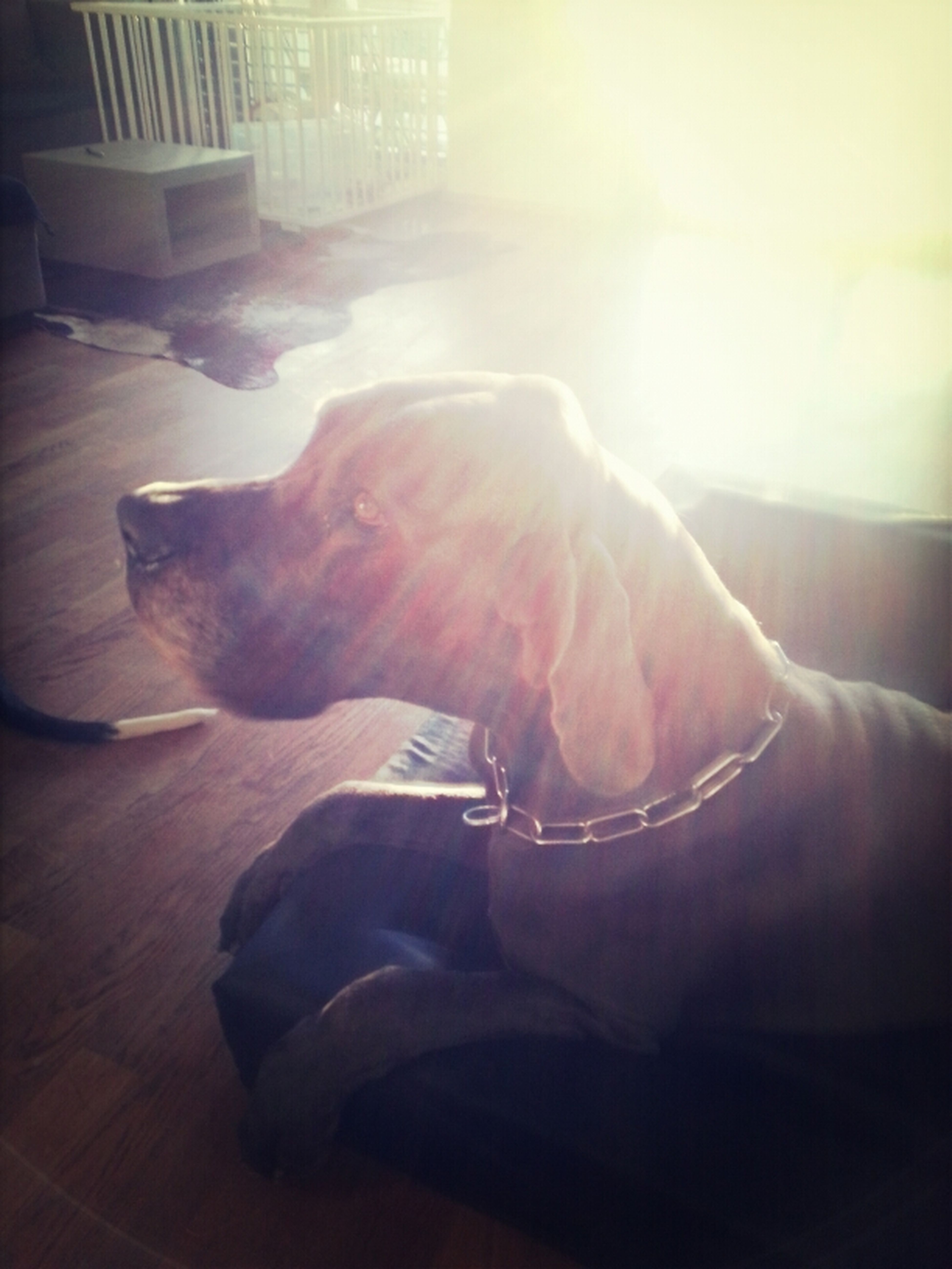 Dogge *-* Kastro ;D