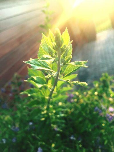 Greenthumb 👍💚🌼🌻💜 Plants 🌱 Plant Life