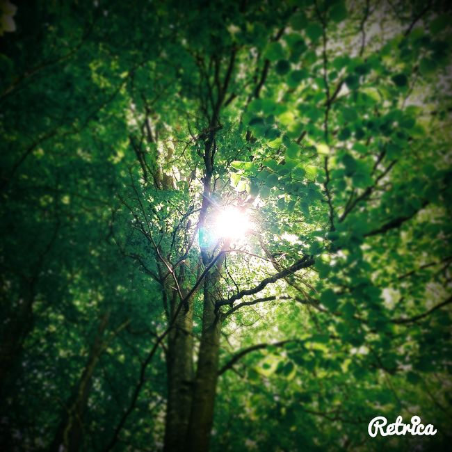 Trees TreePorn Sun Sunlight Sunlight, Shades And Shadows Light And Shadow Sunshine Above Me Springtime Retrica Leaves🌿 Leaves Woods Nature Nature_collection Naturelovers Color Palette Color Palette