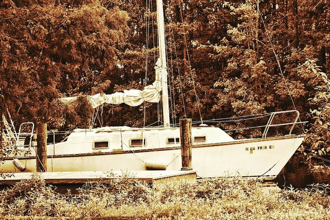 Tree Day Outdoors No People South Louisiana Black And White Collection  Riverbank Lush Foliage Boat Dock Sailboat Masts Rigging Rope