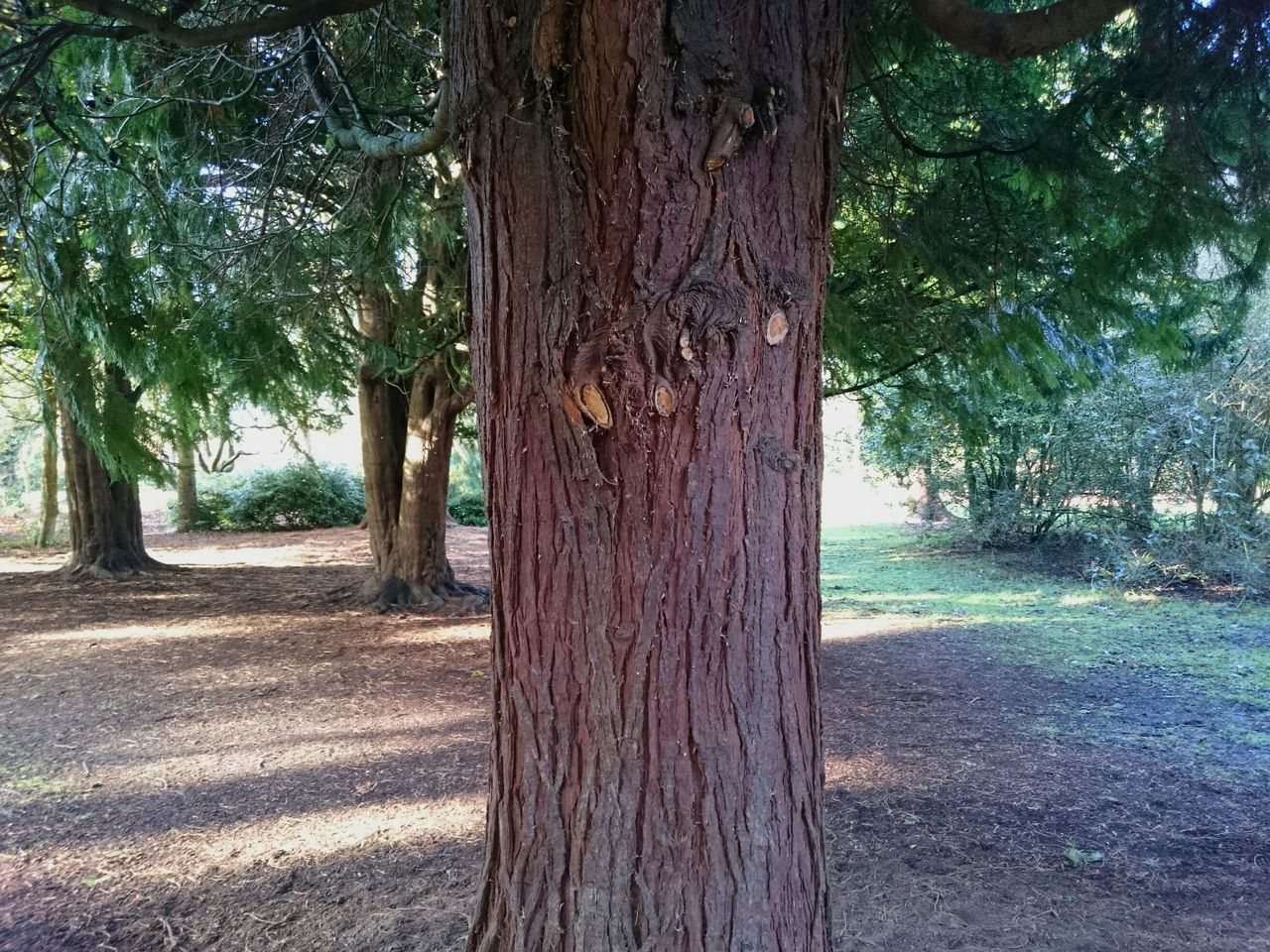 tree, tree trunk, nature, growth, no people, day, outdoors, forest, beauty in nature, branch