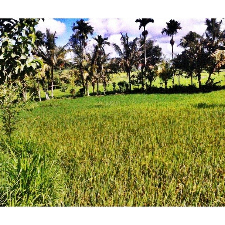 Hello World! Batukliang Village Rinjani Mount 3726mdpl Lombok INDONESIA Lombok-Indonesia Farmerland