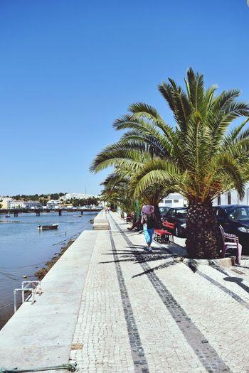 Palm Tree Sunny Tree Summer Tavira, Portugal