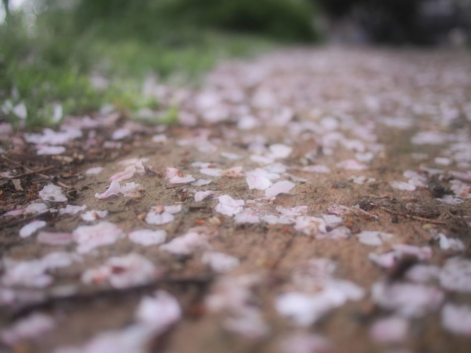 Nature Surface Level Selective Focus Outdoors Day No People Autumn Tranquility Road Close-up Tree Beauty In Nature Fukuoka Japan Olympus EyeEm EyeEmNewHere