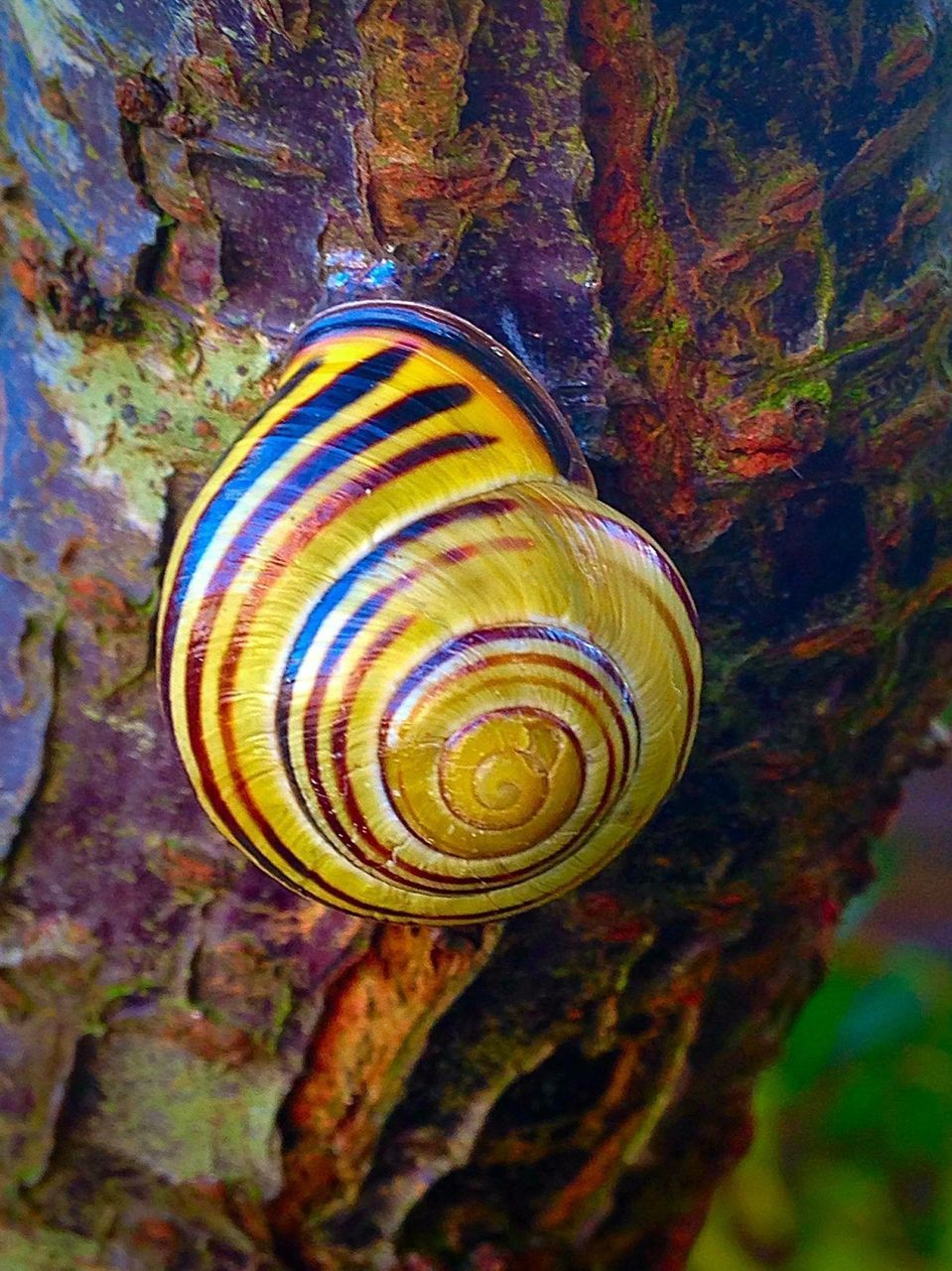 nature, snail, wildlife, animal themes, one animal, spiral, animals in the wild, gastropod, close-up, beauty in nature, no people, day, fragility, outdoors