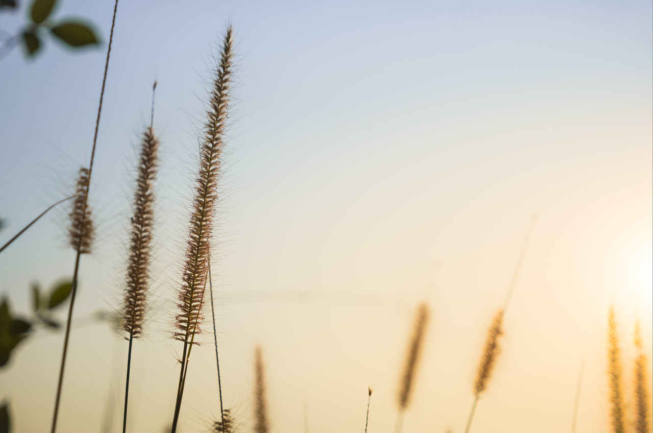 Beautiful stock photos of sonnenschein, Beauty In Nature, Clear Sky, Focus On Foreground, Low Angle View
