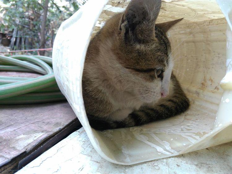 Cat FUNNY ANIMALS Dnd