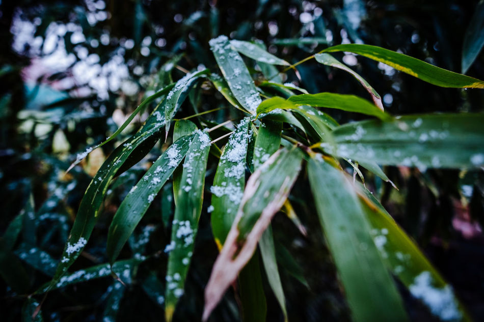 Animal Themes Beauty In Nature Close-up Cold Temperature Day Drop Fragility Freshness Green Color Growth Leaf Nature No People Outdoors Plant RainDrop Water Weather Wet