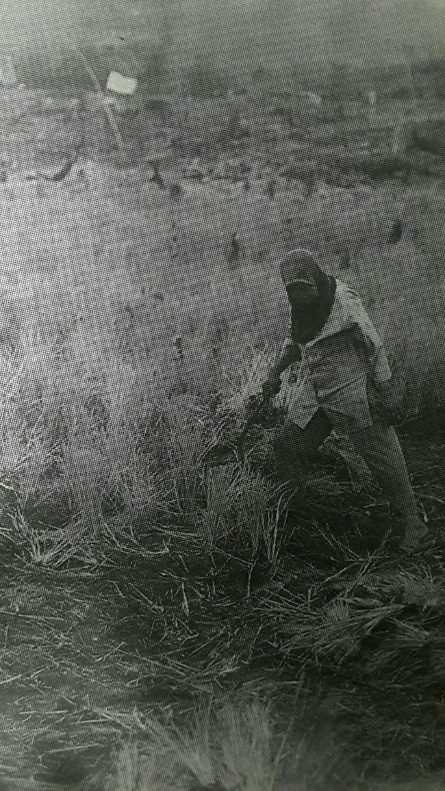 "Capturing original picture (Kompas/Yuniadhi Agung) on page 22nd of Kompas Daily Newspaper (10/26/15) had titled ""Sawah Terbakar"". Petani Kebakaran Lahan"