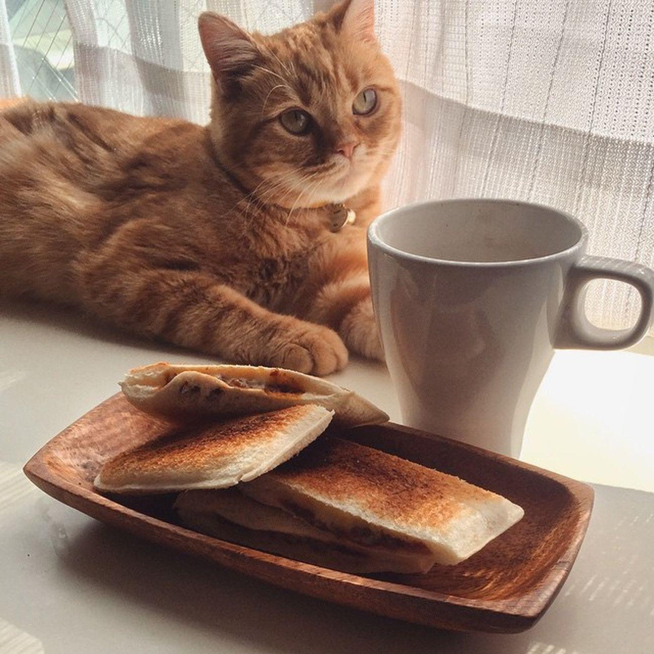 """朝ごはん ランチパック フジパン 元祖スナックサンド ホットサンド cat neko ねこ 猫 ネコ cats スコティッシュフォールド scottishfold 茶トラ ロロ lolo コケティッシュフォールド コケティッシュホールド 簡単ホットサンド…ランチパック焼くだけね😆😸💦ちなみにこれはヤマザキの""""ランチパック""""でなくて…フジパンの""""元祖スナックサンド""""ですよ…元祖ってくらいだからランチパックより前に出てたのだろうか?"""