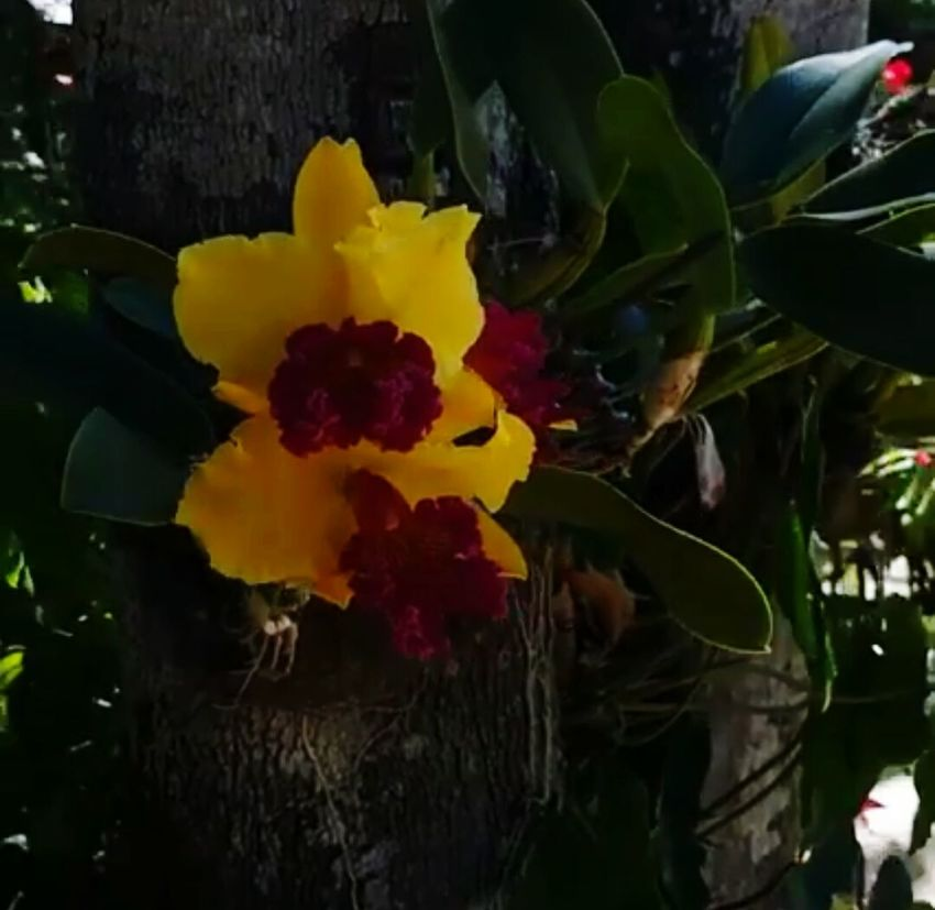 Nature Yellow Flower Beauty In Nature Leaf Plant Fragility Outdoors Colorfull Beauty In Nature ILove Orchid Flower Sobeutiful Mygardenflower