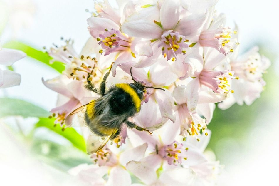 Beautiful stock photos of bee, Beautiful, Beauty In Nature, Blooming, Close Up