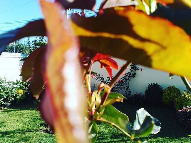 What do you think?, Sequel Amateurphotography Amateurphotographer  Love Red Leaf Photography