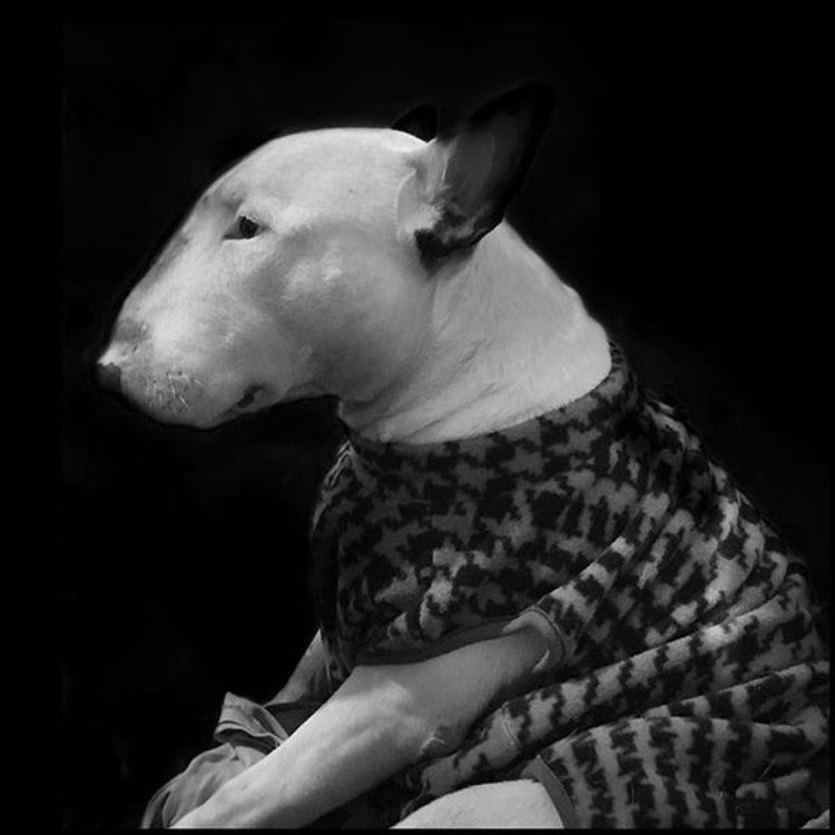 Blackandwhite Cut Pets Self Portrait Pets Animals Dogslife Dogs Dogstagram Bully Bulls ❤ Bullylove Bullterrier Bull Dog Love Relaxing Hello World Enjoying Life Popular Playing With The Animals My Dogs Are Cooler Than Your Kids Meeting Friends