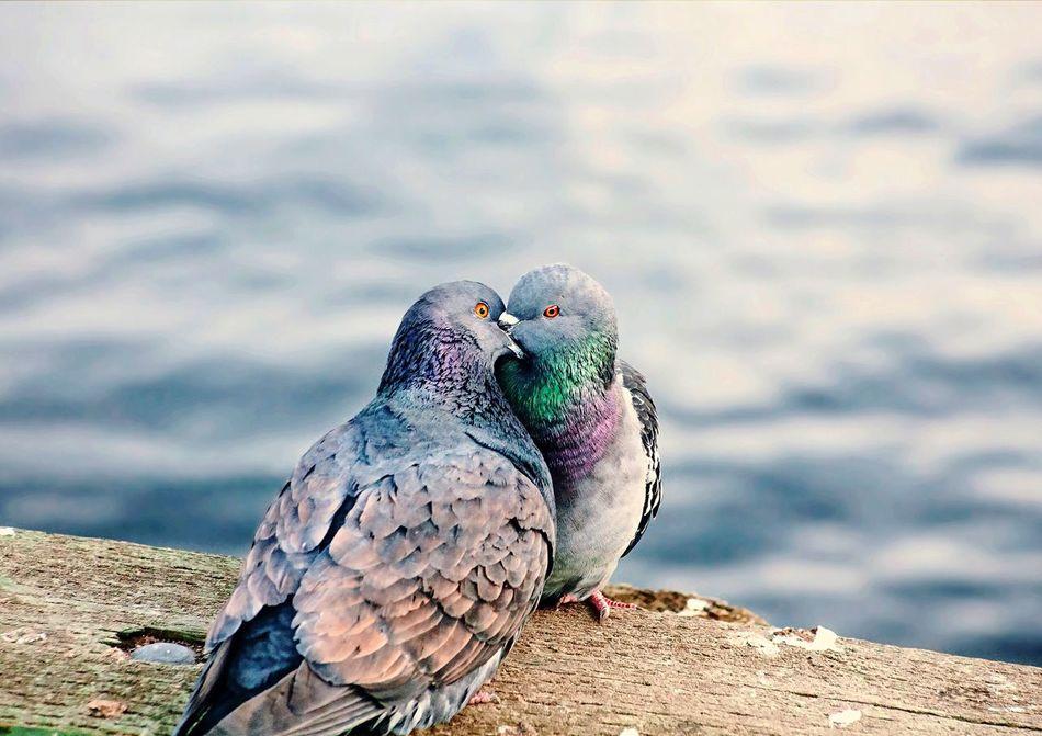 Beautiful stock photos of wildlife,  Animal Head,  Animal Mating,  Animal Themes,  Animals In The Wild
