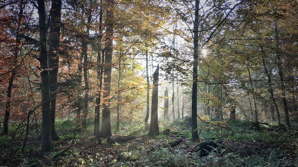 Tree Nature Forest Beauty In Nature WoodLand Sunlight Autumn Interesting Perspectives Nature Photography Taking Photos