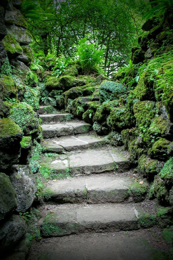 Steps Stone Steps Stone Wall Secret Places Secret Gardens Secret Stairways Trees Green Nature Photography Nature_collection Nature Somewhere Special A Piece Of History