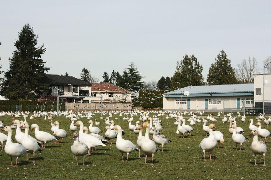 Beautiful stock photos of vogel, Animal Themes, Animal Wildlife, Animals In The Wild, Architecture