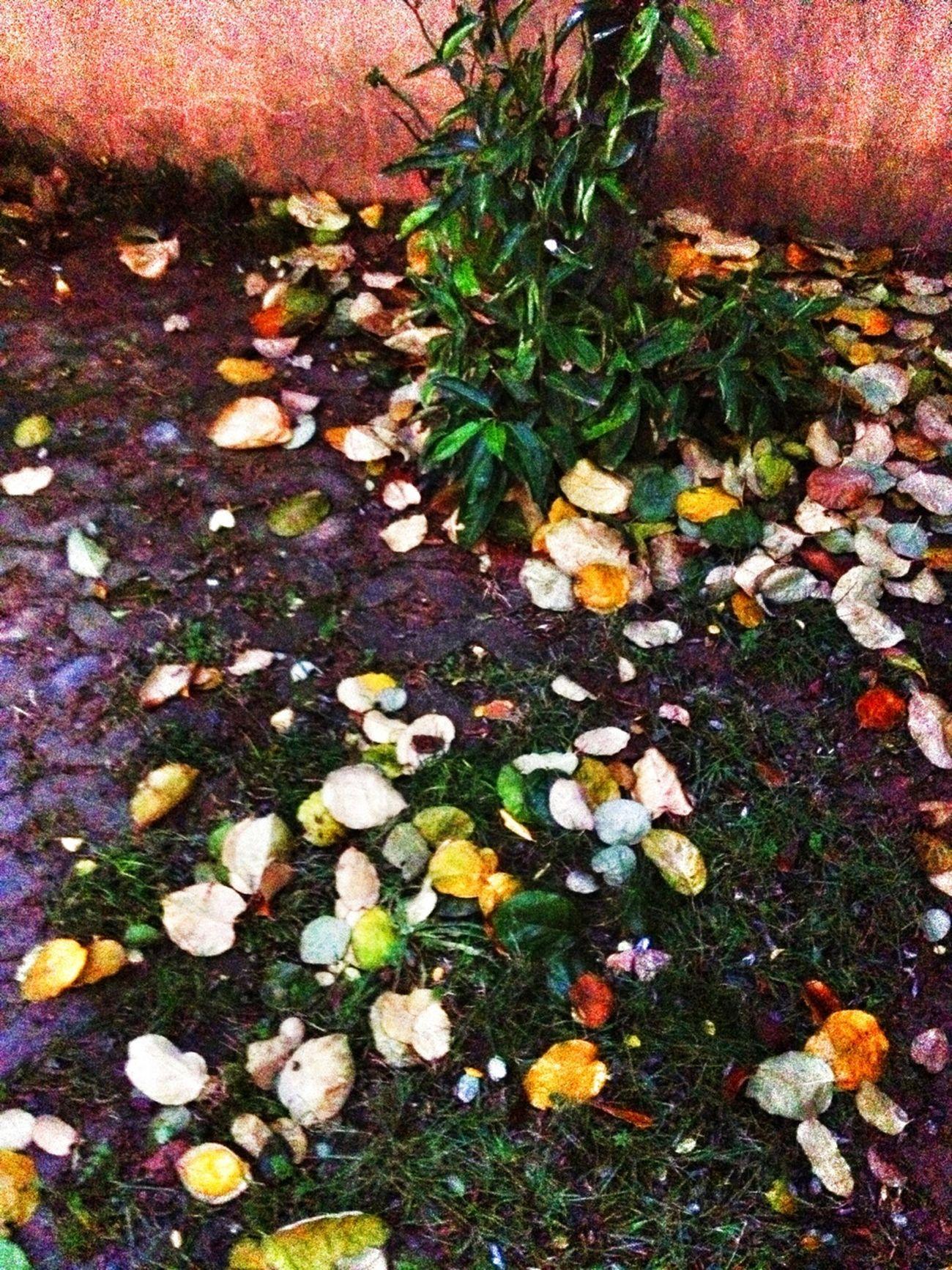 Arka bahçede yaprak yaprak renk cümbüşü devam ediyor