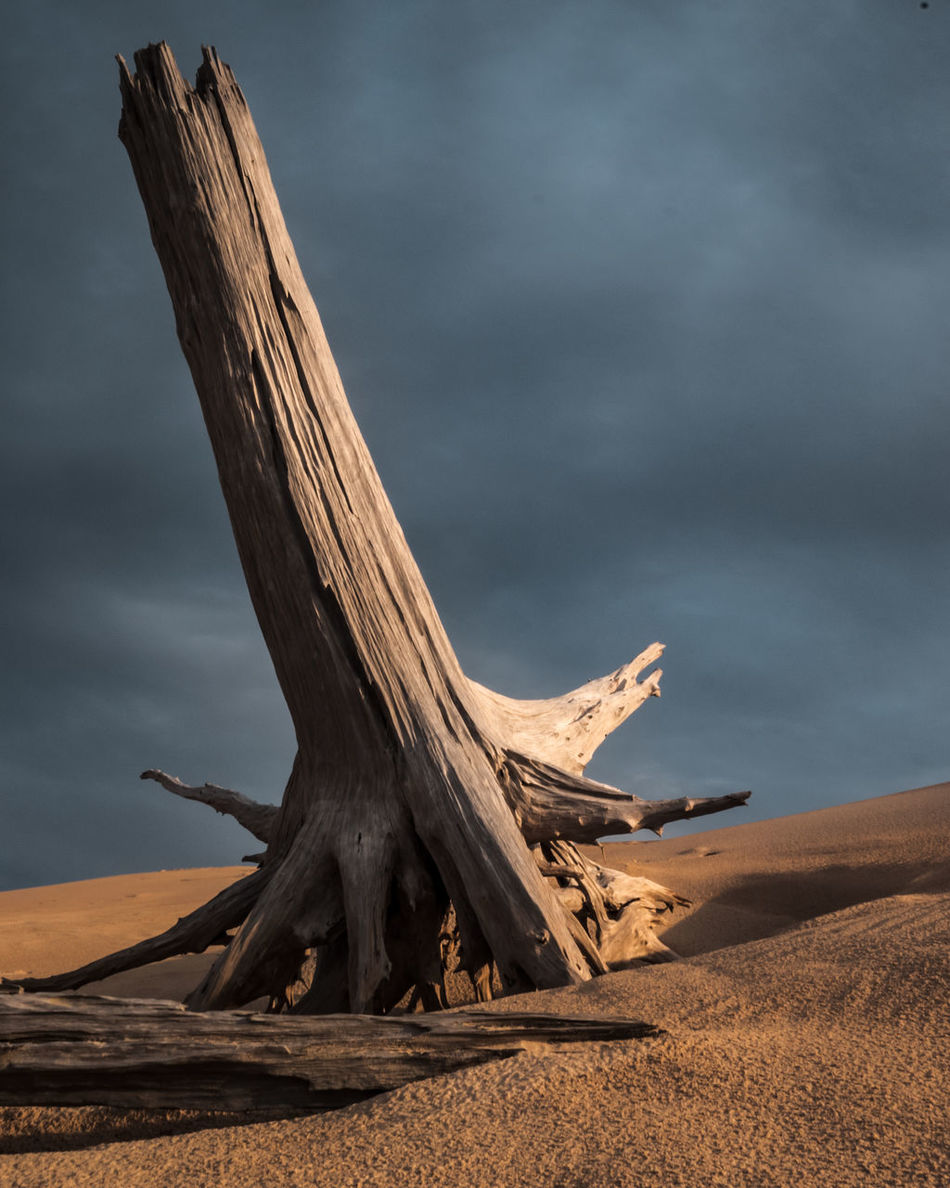 Arid Climate Beauty In Nature Cloud - Sky Dead Desert Driftwood Nature No People Outdoors Sand Sand Dune Scenics Sky Tranquil Scene Tranquility Tree Trunk Wood