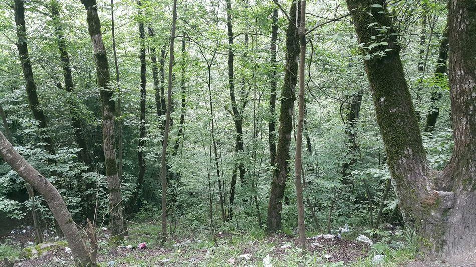 Forest Javaherdeh north of Iran