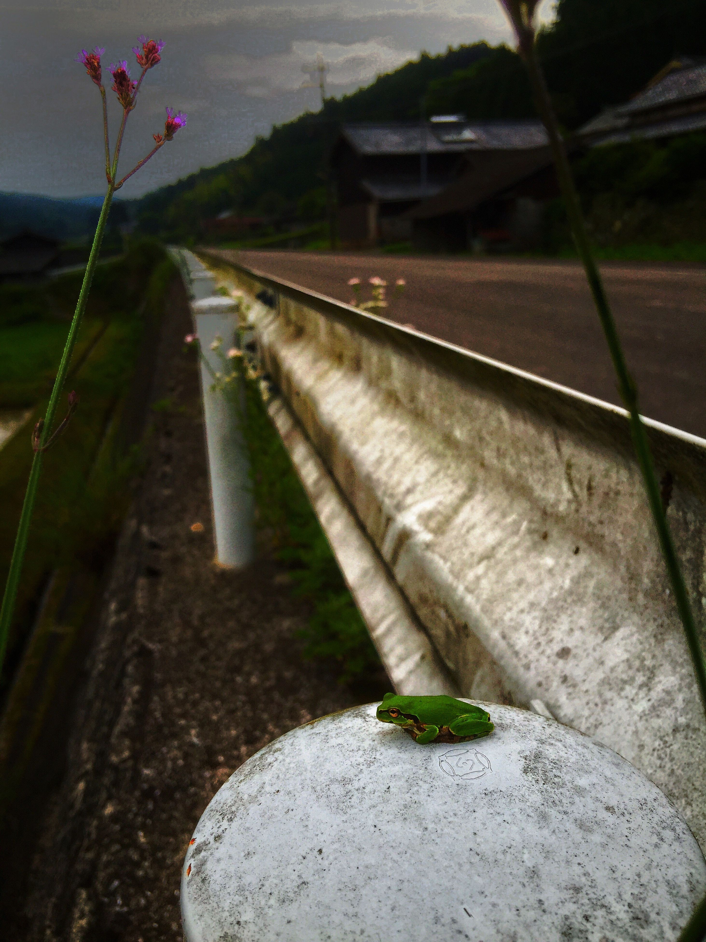 plant, high angle view, transportation, growth, railroad track, outdoors, nature, road, no people, day, street, leaf, selective focus, rock - object, close-up, green color, stone - object, focus on foreground, the way forward, built structure