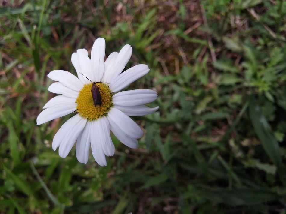 My Back Yard EyeEm Nature Lover Flower Blooms