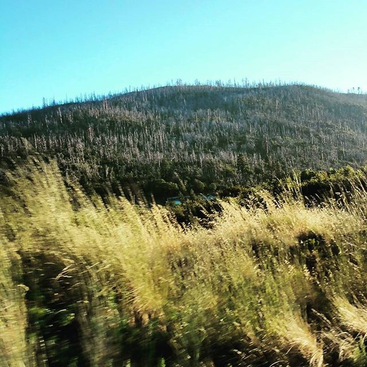 Random Nature Shot while driving through the Hillsides . bluesky grass wilderness green